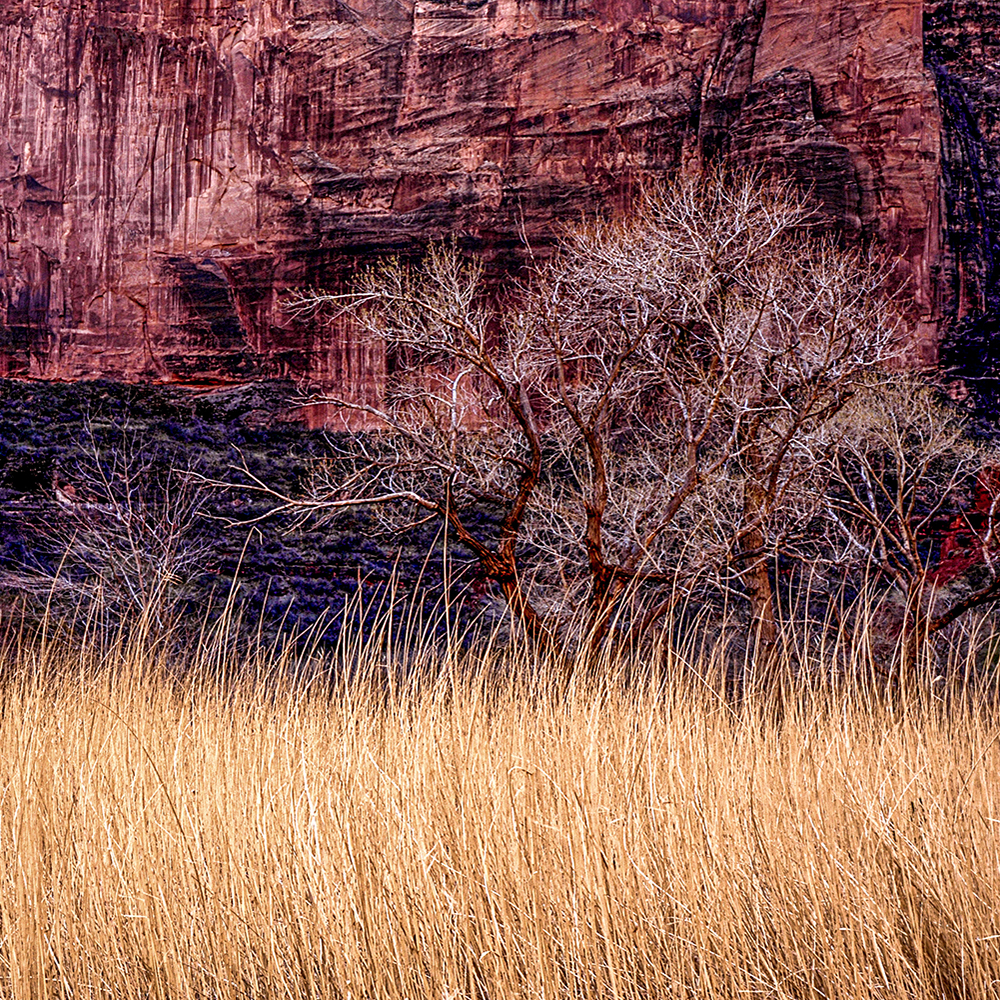 Dry grass against red sandstone cliifs in Zion, Zion National Park