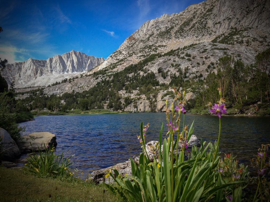 Wildflowers at Long Lake, John Muir WIlderness