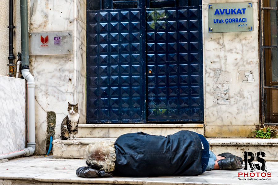 Istabul cat protecting homeless guy